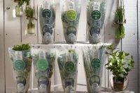 Les Herbes de mon Père - Packshot Plantes fraîches